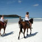 Horses Treks