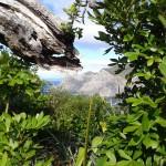 A peek at Cape Brett from the top of Motu Kokako